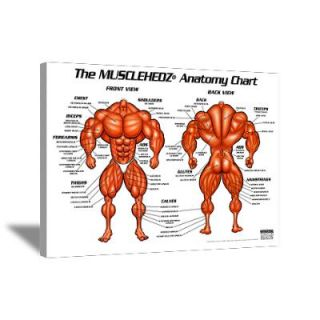 Wall Art > Canvas Art > MUSCLEHEDZ Anatomy Chart Canvas
