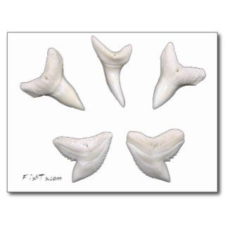 The Real Jaws Sharks Teeth Postcard