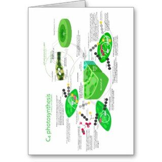 C4 Photosynthesis Diagram Cards