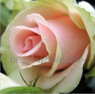 Beautiful 50 25pcs Rose Seeds Various Color Petal Plants Home Garden Flower Seed
