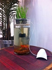 Home Aquaponics System 1gal Desktop Betta Fish Tank Grows Fish and Plants