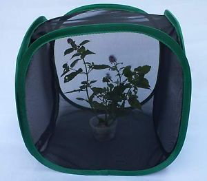 Praying Mantis Stick Insect Leaf Insect Butterfly Chameleon Pop Up Cage