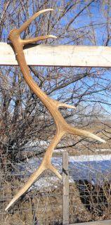 Elk Sheds Elk Antler Elk Horn Mule Deer Shed Deer Sheds Deer Antlers Deer Horns
