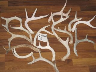 16 Small Whitetail Deer Antlers Dog Chews Treat Elk Lot Shed Horn Taxidermy Toys