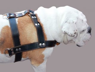 "Real 2ply Leather Dog Pulling Harness 33 37"" Chest Size Rottweiler Boxer Pitbull"