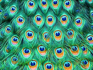 Peacock Eye Feathers Sheet Edible Cake Topper Icing Fondant Wafer Paper