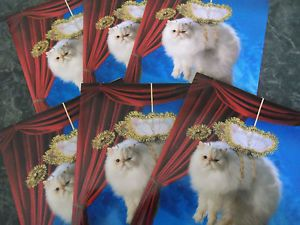 Avanti Greeting Cards Persian Cat Greeting Cards Christmas Cards Kitty Cat Angel