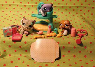 Lot of 3 Littlest Pet Shop Cozy Care Center Complete 483 Cat 482 481 Dog Doctor