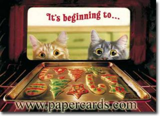 2 Cats Watch Cookies Bake Boxed Christmas Cards 10 Greeting Cards by Avanti