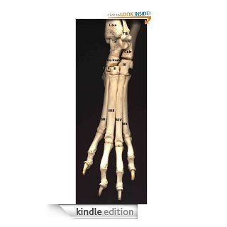 The Pelvic Limb (Pictures of Veterinary Anatomy) eBook Clemens  Knospe Kindle Store